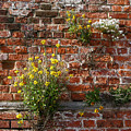 Wall Flowers by Ann Horn
