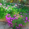 Wall Flowers, Croatia by Judy Coggin
