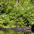 Wall Of Green And Gator by Jack Norton