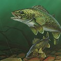 Walleye by Anthony J Padgett
