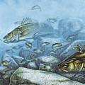 Walleye Reef by Jpn Q Wright
