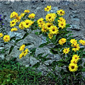 Wallflower Ain't So Bad by Steve Harrington