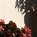Wallflower by Linda Shafer