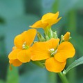 Wallflower Orange by MTBobbins Photography