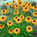 Wallflowers by Steve  Gass