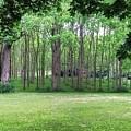 Walnut Grove by Kathy McCabe