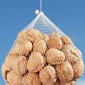 Walnuts by Gaspar Avila