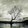 Wanaka Tree - New Zealand  by Unsplash