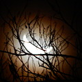 Waning Crescent Moon 2 by Virginia Kay White