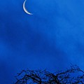 Waning Crescent by Peggy Hughes