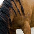 War Horse by Lorraine Devon Wilke