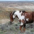 Warhorse by Jim Garrison
