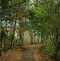 Wariman Pathway by Teresa Stallings