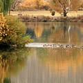 Warm Autumn River by Carol Groenen