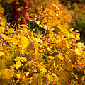 Warm Fall Colors by Bob Mintie