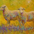 Warm Glow - Sheep Pair by Marion Rose