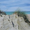 Warren Dunes by Mary Rogers