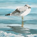 Wary Seagull 2 by Linda Speaker