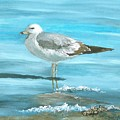 Wary Seagull by Linda Speaker