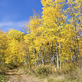 Wasatch Fall by Chad Dutson