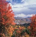 212m45-wasatch Mountains In Autumn  by Ed  Cooper Photography