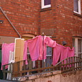 Wash Day Pinks by Jez C Self