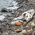 Washed Up by Kelly Mezzapelle