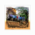 Washing Line And Cows Indian Village Rajasthani 1b by Sue Jacobi