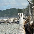 Washington Beach by Diane Greco-Lesser