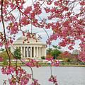 Washington Dc Cherry Blossom by Juergen Roth