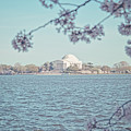 Washington Dc In Spring by Emily Kay