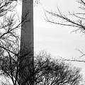 Washington Monument Bw by Travis Rogers