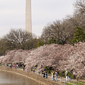 Washington Monument In Spring by Tim Grams