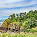 Washington State Coastline by Jean OKeeffe Macro Abundance Art