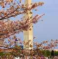 Washinton Monument In Spring by Tina Meador