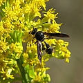 Wasp 2 by J M Farris Photography