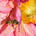 Wasp And Flower by David Arment