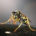 Wasp At Work by Paul Gavin
