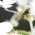 Wasp At Wotk by Robert Skuja
