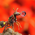 Wasp Blowing Bubble 160507c by Lim Choo How