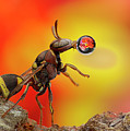 Wasp Blowing Bubble 160605d by Lim Choo How