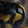 Wasp Eye by Anders Larsen