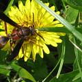 Wasp by Martie DAndrea