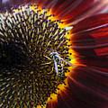Wasp by Rasma Bertz