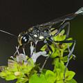 Wasp Visit by Csaba Vadasz