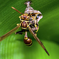 Wasp With Egg by Warren Sarle