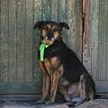 Watchdog by Juan Gnecco