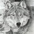 Watchful Eyes by Carla Kurt