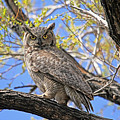 Watchful Eyes by Donna Kennedy