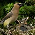 Watchful Parent by Damon Calderwood